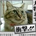 takara11-18