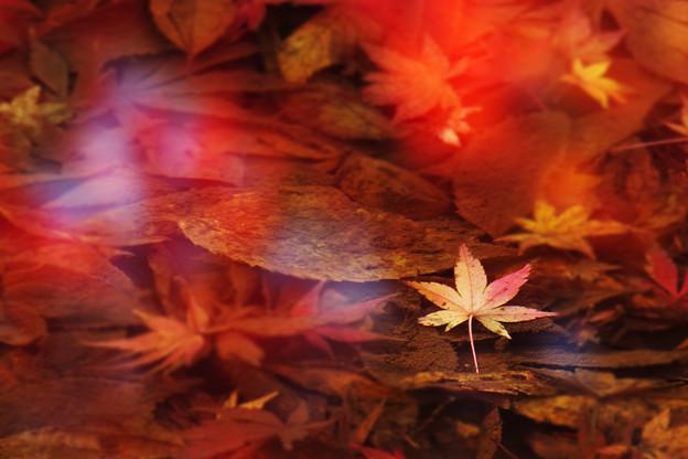 Photos: 水中の秋