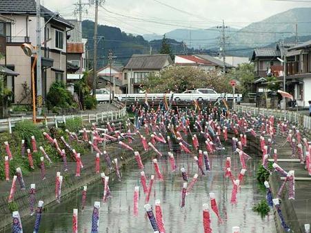 島田・金谷地区 清水川にミニこいのぼり大群登場-220424-1