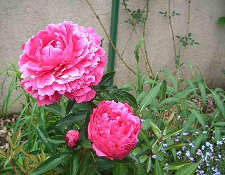 flower-180525-1