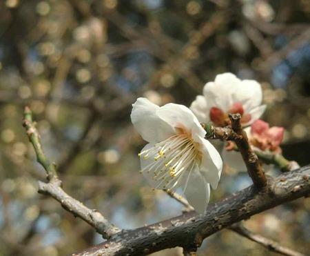 houkokujinjya-230227-7