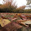Photos: 落ち葉と横たわり