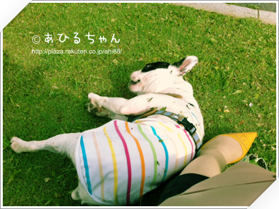 写真: 20110523_01