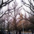 Photos: 2010-12-12 15_31_55