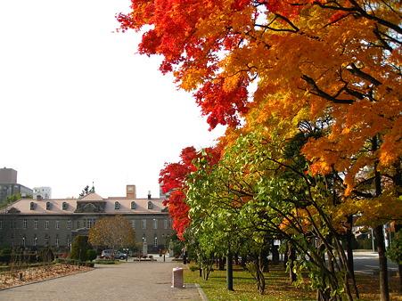紅葉と札幌資料館