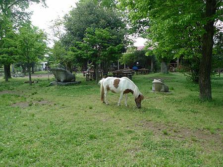 モーモーファーム竹原牧場(2)
