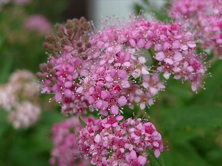 戒壇院前に咲いていた花。良く見かけるけど何て名だろう?