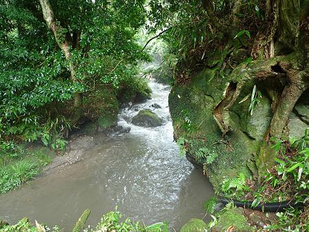 山吹水源(2)