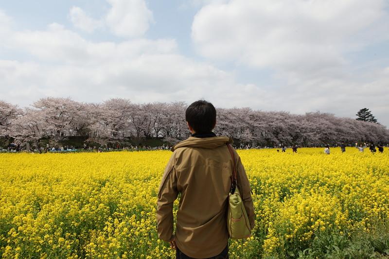 IMG_1484権現堂桜堤
