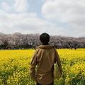 Photos: IMG_1484権現堂桜堤