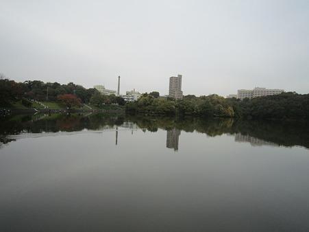 20101113 016