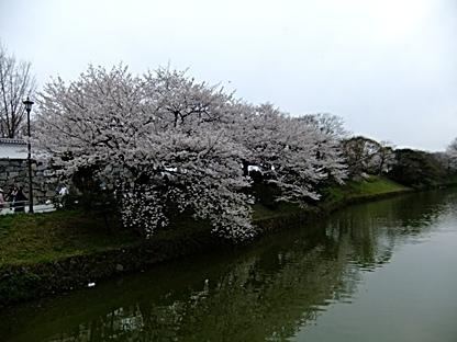 水面に映し出された桜