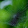 美しき 緑の中の 落とし穴
