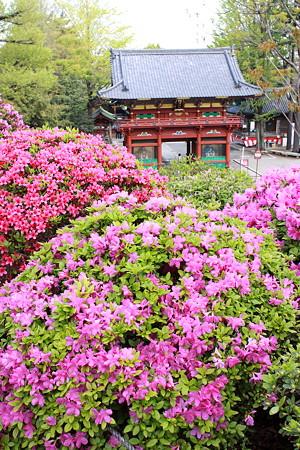 根津神社(2)