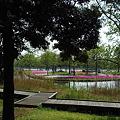 Photos: 芝桜の島