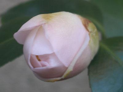 20080228雛鶴