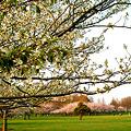 写真: みさと公園 春