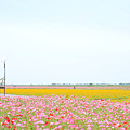 <荒川左岸*南風 in 2011>