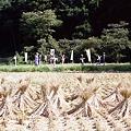 写真: 秋の小湊鉄道2010 14