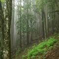 大山の森林