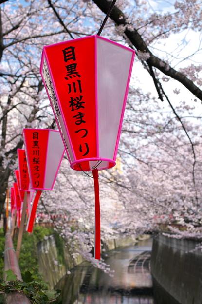 写真: 2010年目黒川・桜02