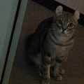 Photos: 自由を得て緊張のネコ君♪