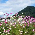 榛名富士とコスモス3