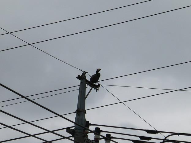 Photos: 見知らぬ鳥発見!!